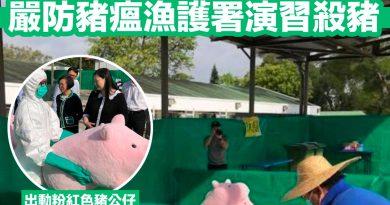 粉紅豬豬演習非洲豬瘟